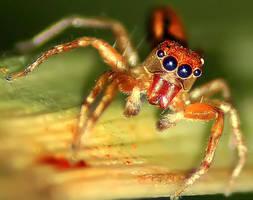 Fire Spider by Demoninheaven