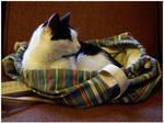 Cat in a Bag by joannastar