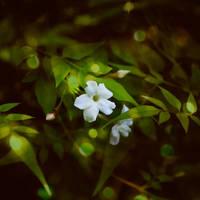 night flower by joannastar
