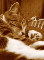 Sleeping Whiskers by asrei