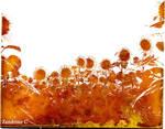 Tournesols 01 / Sunflower 01 / Girasole 01 by Zandrine-C