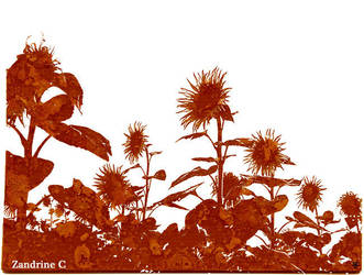 Tournesols 03 / Sunflower 03 / Girasole 03 by Zandrine-C