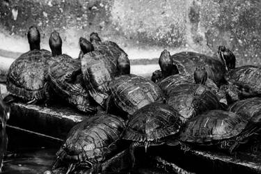 A crowd of Turtles - Malta - 49 by silentmemoria