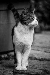 A cat with a happy grin - Malta - 53 by silentmemoria