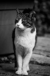 Unsatisfied Cat - Malta - 54 by silentmemoria