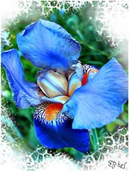 In Full Blossom by DJKpf