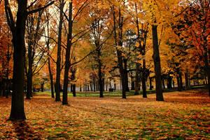 Fall in High Park by KMourzenko