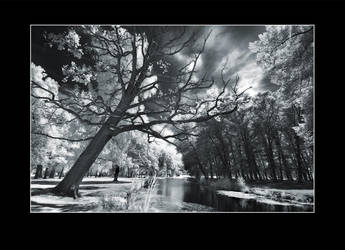 Haunted Tree by Basement127