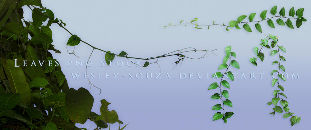 Leaves PNG Stock 4 by Wesley-Souza
