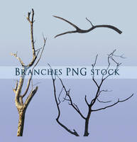 Branches PNG stock 2 by Wesley-Souza