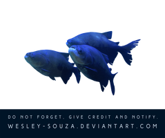 Fish PNG Stock by Wesley-Souza