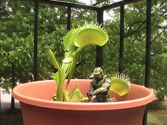 Flytrap Scarecrow by Budukai