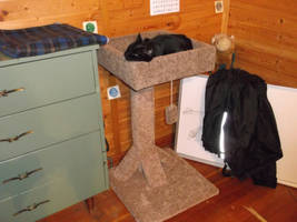 My kitty and her new scratching post by horse14t