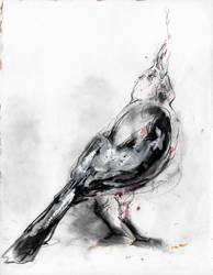 Crow by Natalie-CaLoie