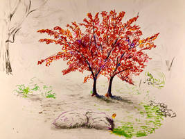 Fall colors by akarudsan