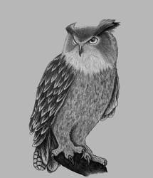 Owl pencildrawing by TheClumsyFellow