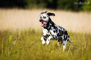 Happy spots by IllusionoftheDay