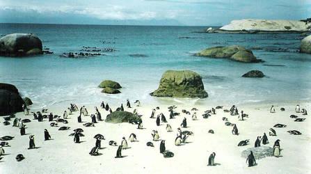 penguin by capri