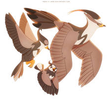 Staravia Starly and Staraptor by francis-john
