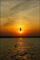 Bird in the Way by Noe-Me