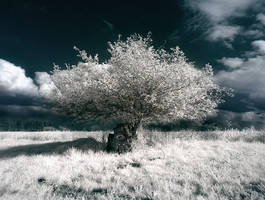 MCX Tree by MaComiX