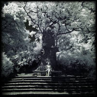 Tree of Life v2 by MaComiX
