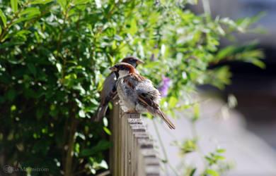 Birdie by gogosweden