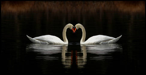 two swans by bene-gesserit