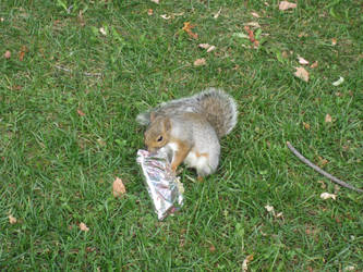 Squirrel food by nexu22