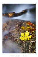 Autumn haiku - III by DimensionSeven