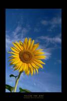 Follow the sun by DimensionSeven