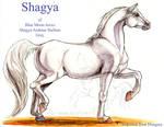 Shagya by lantairvlea