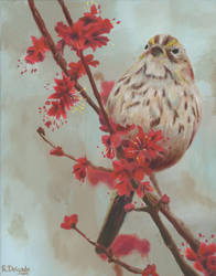 Little Sparrow by ArtistaRachel