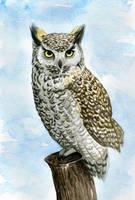 Horned owl by aileensea
