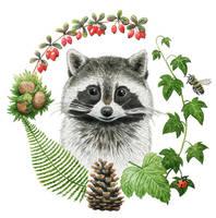 Portrait of a raccoon by aileensea