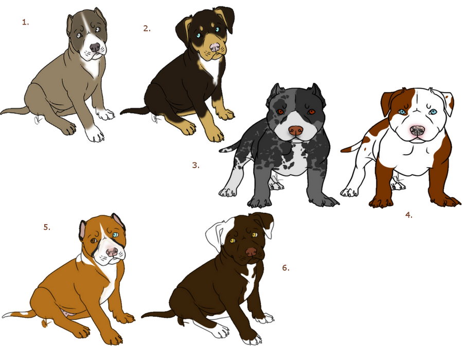 Rescue A Pitbull Puppy Closed By Jbug12365adopts On Deviantart