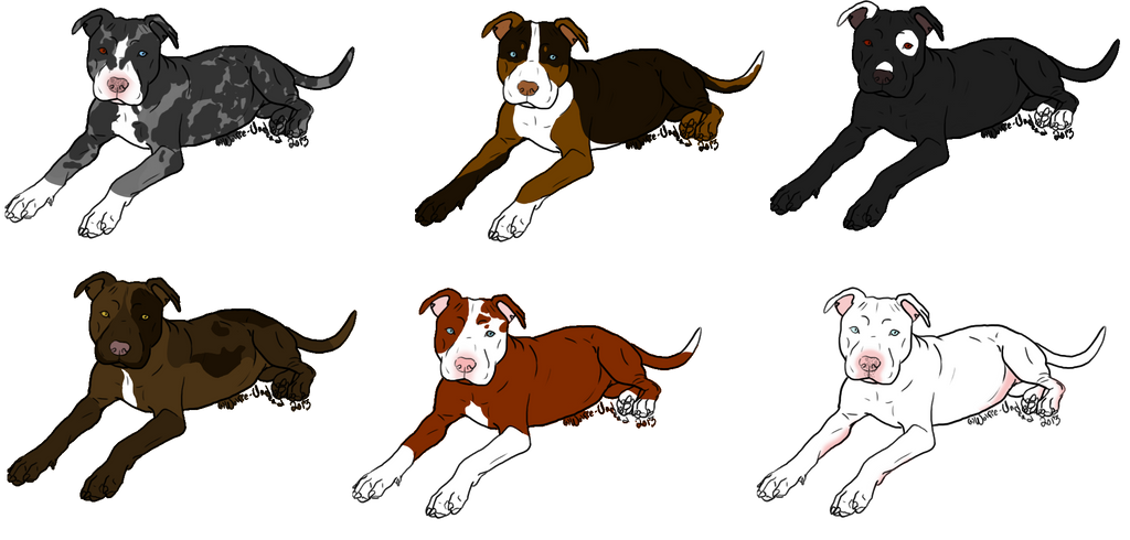 Adopt A Pitbull Puppy Open By Jbug12365adopts On Deviantart