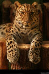 leopard portrait by Draghonia