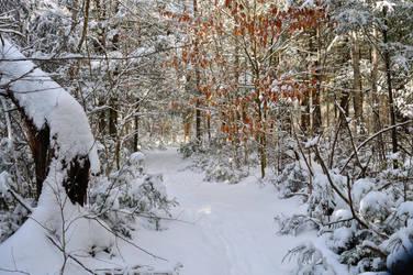 Snowy Trail by Hrimgrimnir