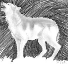 Timber Wolf by KentuckyGibson