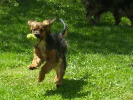 Dog by windsangel