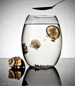 Jellyfish by nadav