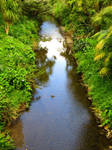 Shallow Brook by BlueDragonRose