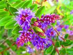 Purple Dances by BlueDragonRose