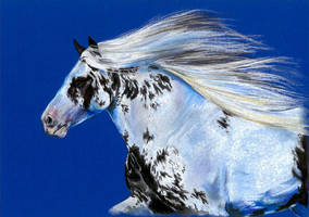 Drawing - Gypsy vanner horse by Ennete