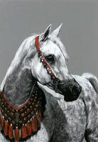 Drawing - White arabian horse by Ennete