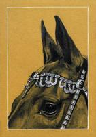 Drawing - Akhal Teke Horse by Ennete