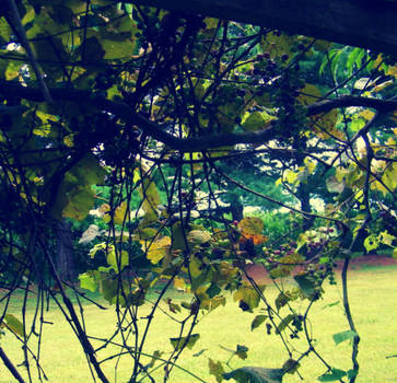 More of the vines of grapes by janette4211