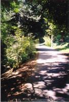 Northwestern Path, Laurelhurst by Abadoss