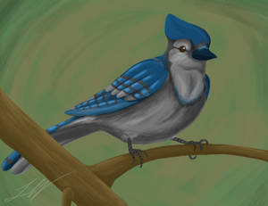 Speed Paint - Bluejay by DarkAdobe